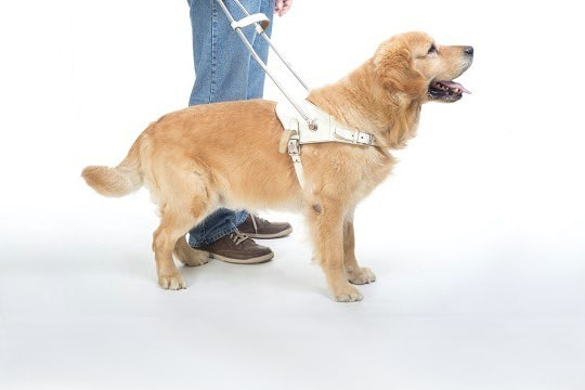 Service Dog Definitions